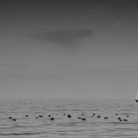 Sailing...., Canon EOS 700D, Canon EF 100-300mm f/4.5-5.6 USM