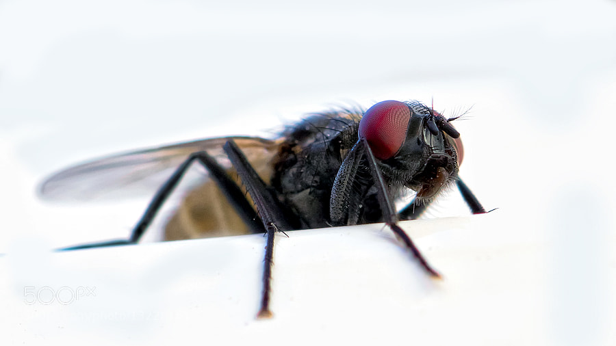Photograph Dark Fly by Kayman Studio on 500px