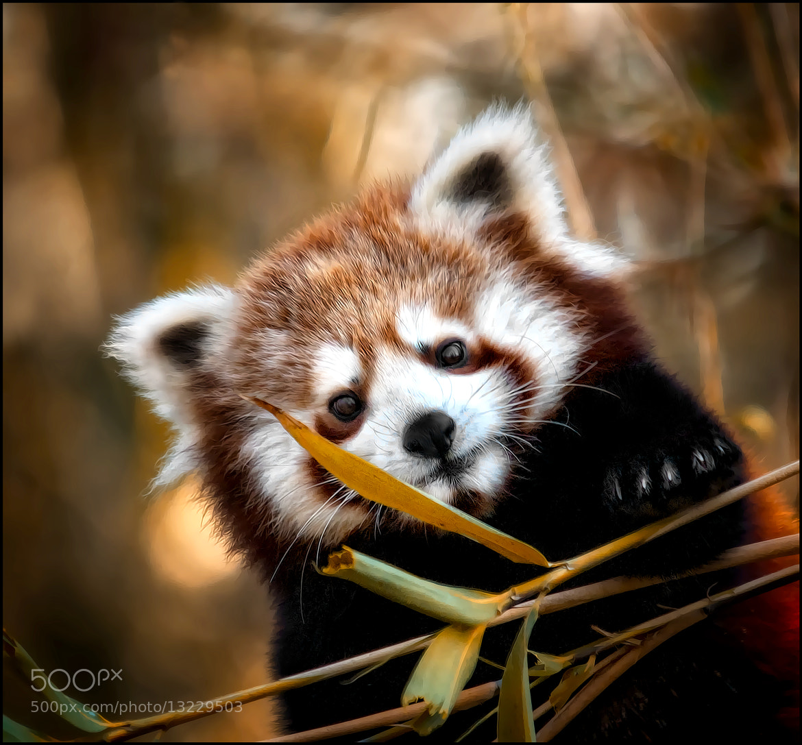 Photograph cuddle me :-) by Sonja Probst on 500px