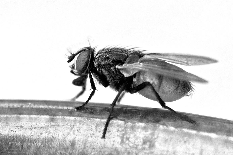 Photograph B & W Fly by Kayman Studio on 500px