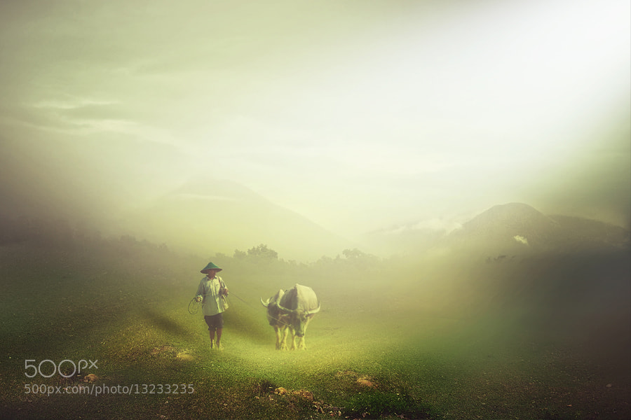 Photograph shepherd by pink sword on 500px