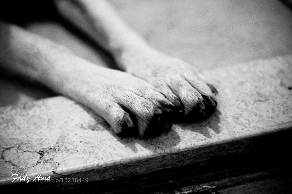Photograph pedicure please? by Fady Anis on 500px