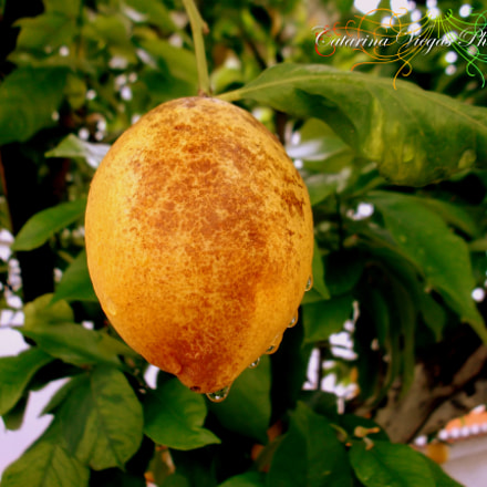 Mr. Lemon, Fujifilm FinePix JX420