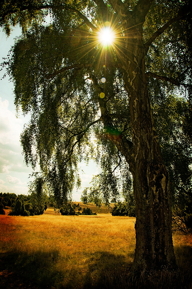 Photograph Golden Light by Close Ups & Wide Angles  on 500px
