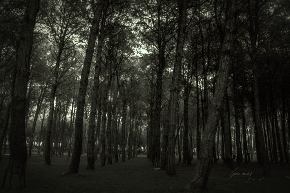 Photograph forest by foura mady on 500px