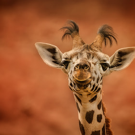 curious by Detlef Knapp (knipser62)) on 500px.com