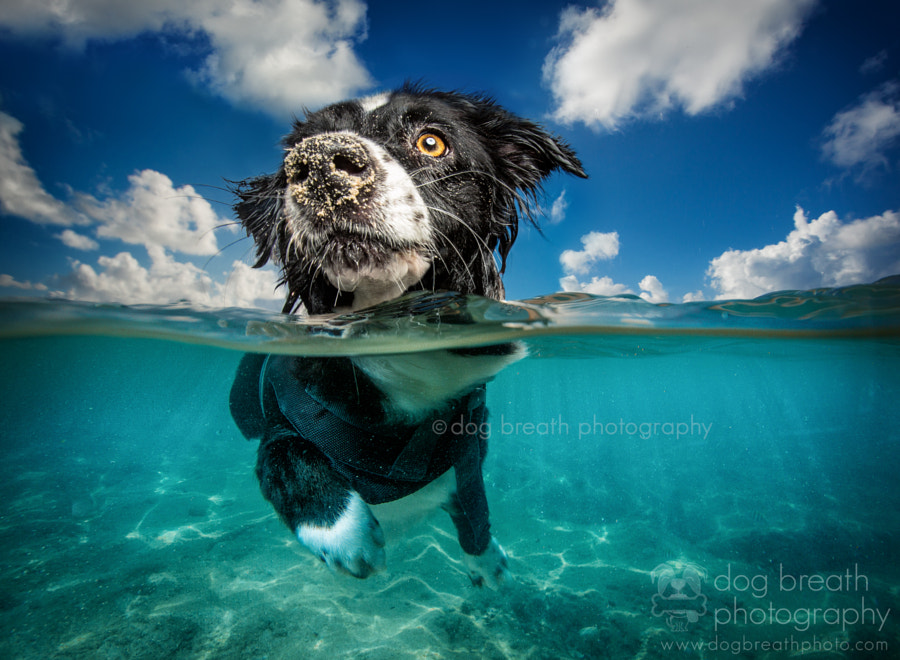 Caribbean Dog by Kaylee Greer on 500px.com