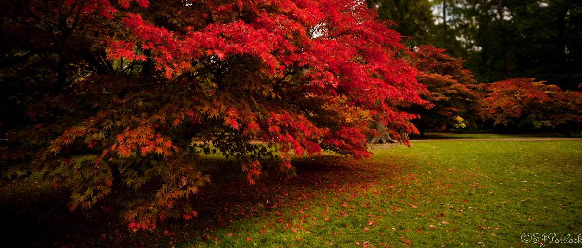 Photograph Autumn Red  by Stephen Portlock on 500px