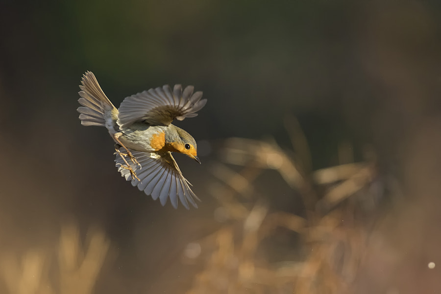 Landing by Marco Redaelli on 500px.com