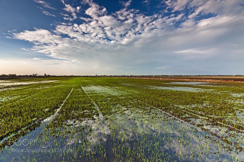 Photograph Paddyfield Reflection by jihhaur lio on 500px