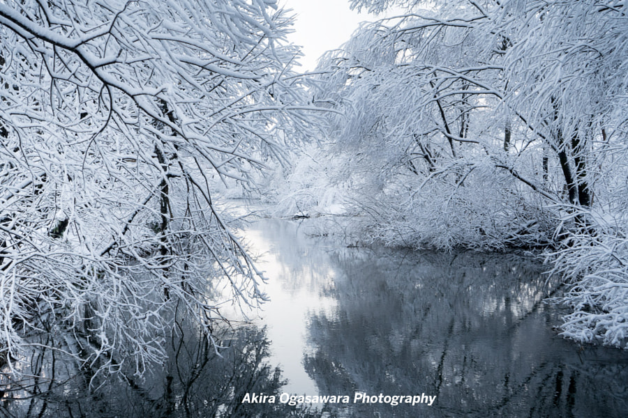 frost covered trees on a river by Ogasawara Akira on 500px.com