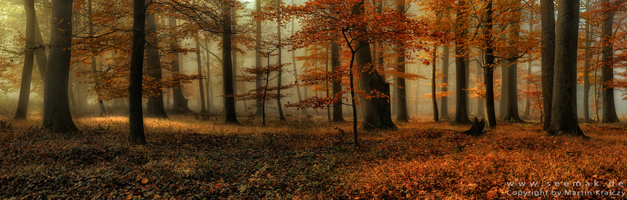 Mystic autumn light by Martin Krajczy on 500px.com