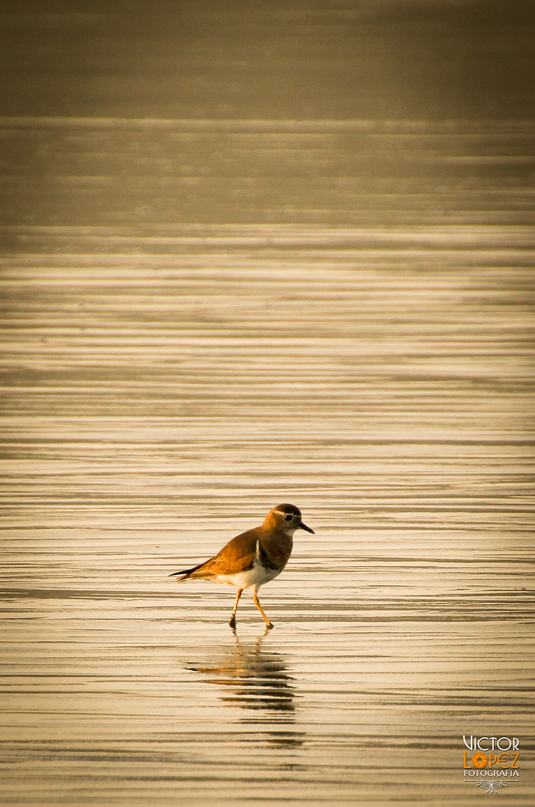 Photograph Alone by Victor Lopez on 500px
