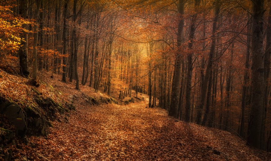 _Inner Light_ by Pedro Quintela on 500px.com