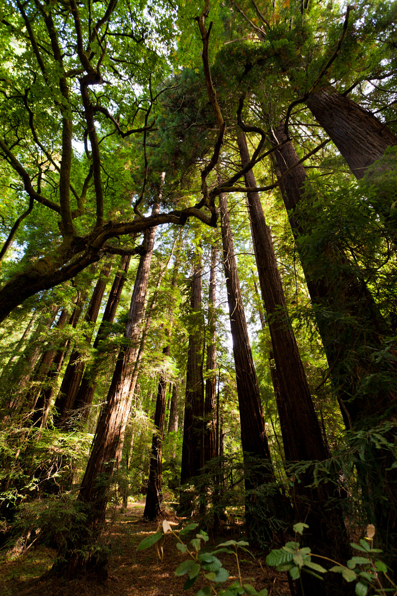Photograph Muir Woods by Hiep Le on 500px