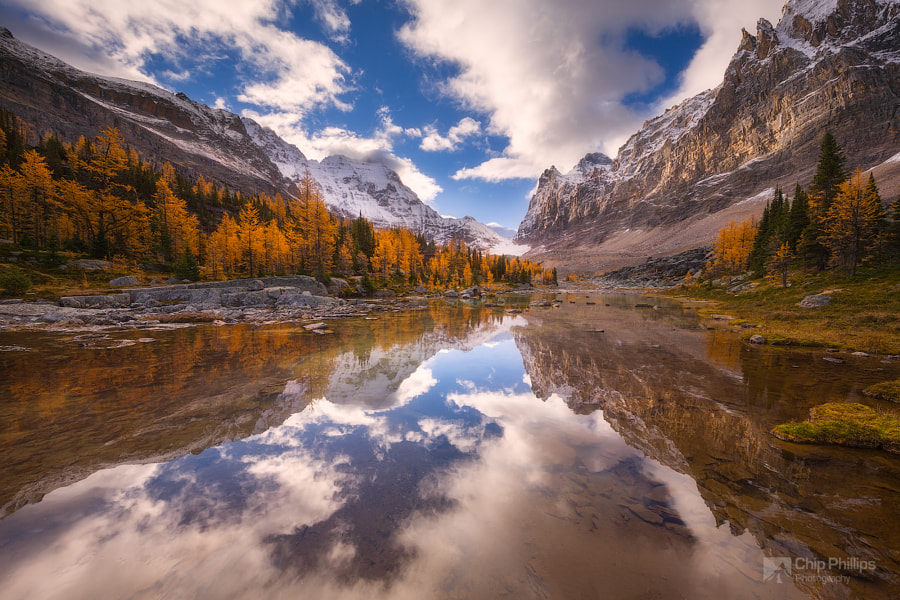 Opabin Plateau Larch Reflections by Chip Phillips on 500px.com