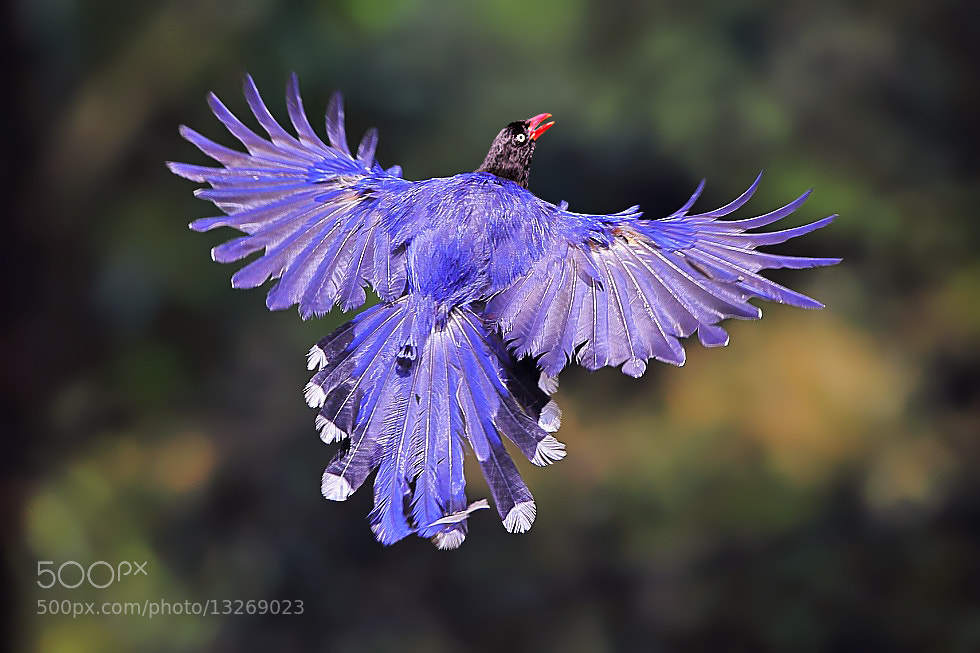 Photograph Blue Warrior by Dajan Chiou on 500px