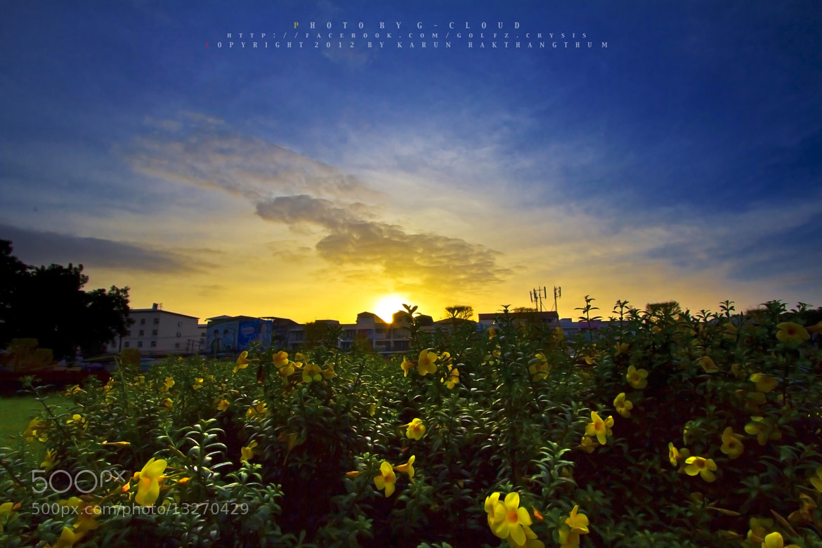 Photograph Morning Flower Thailand by Golfzx Cloud on 500px