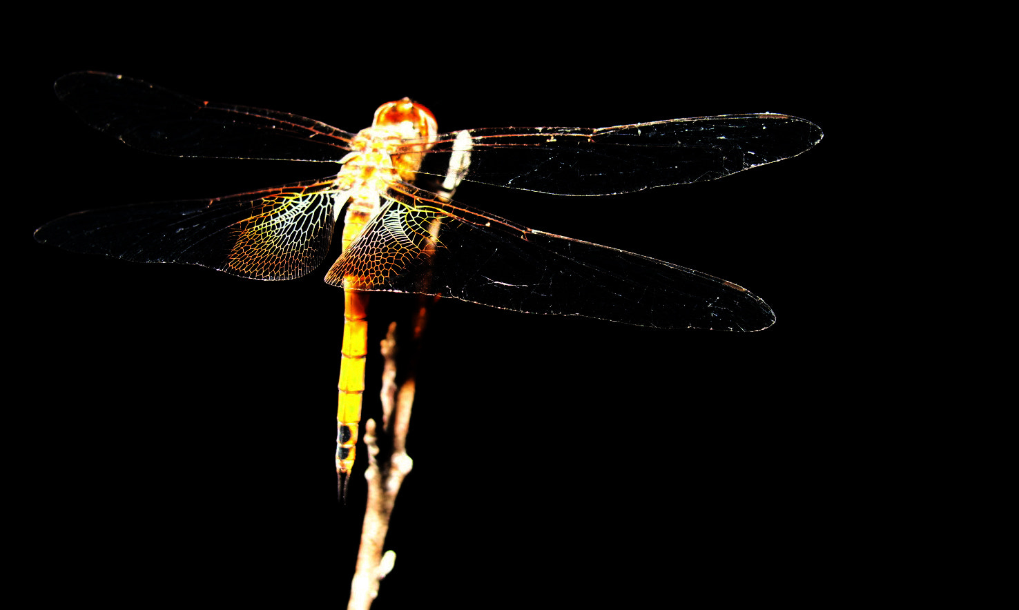 Photograph Dragonfly  by Rick Rodríguez on 500px