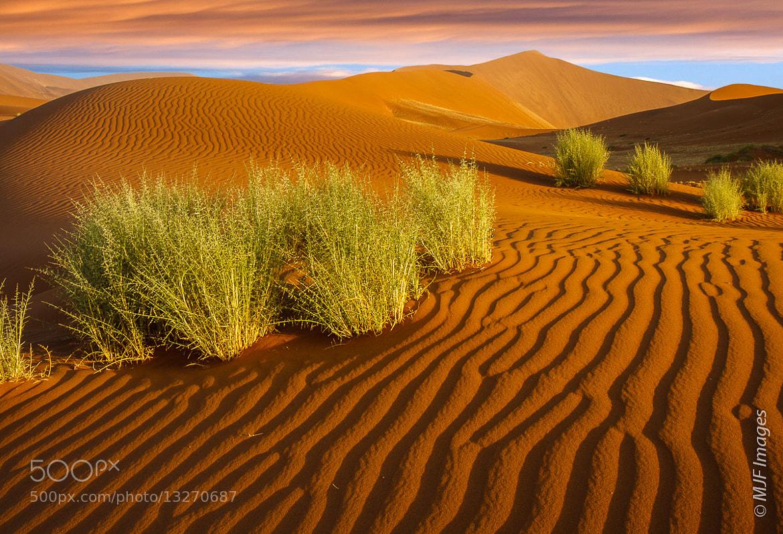 Photograph Namib Vista I by Michael Flaherty on 500px