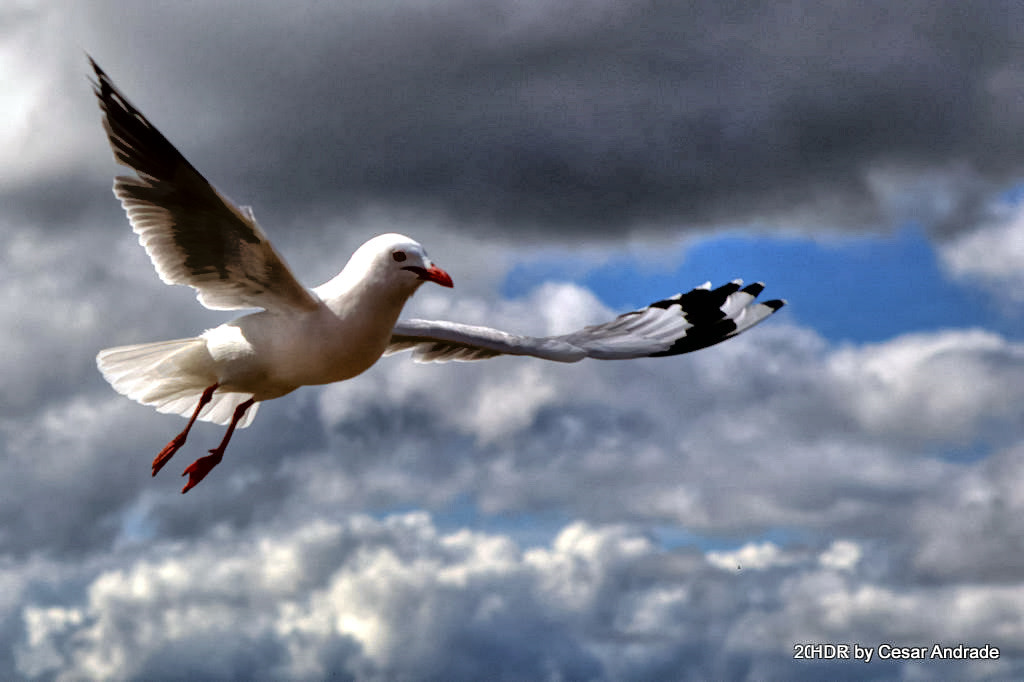 Photograph Free flight by Cesar Andrade on 500px