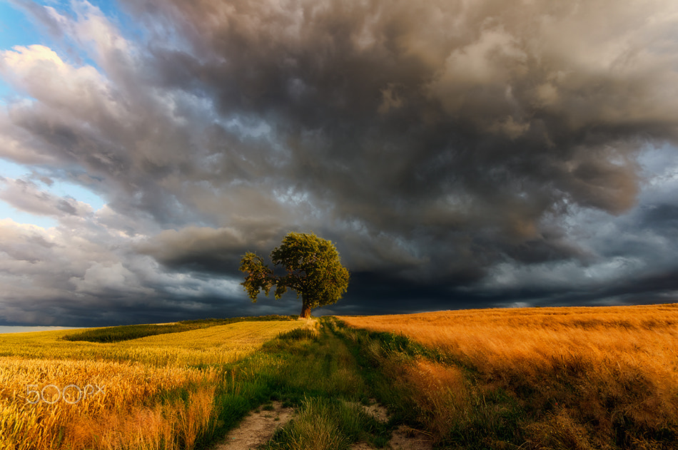 Photograph waiting for the storm by Piotr Krol on 500px