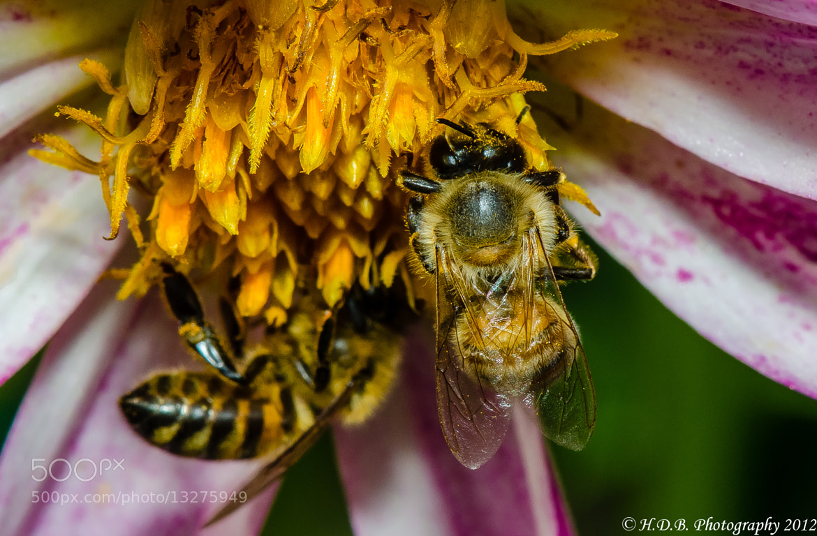 Photograph Got Pollen 2 by Harold Begun on 500px
