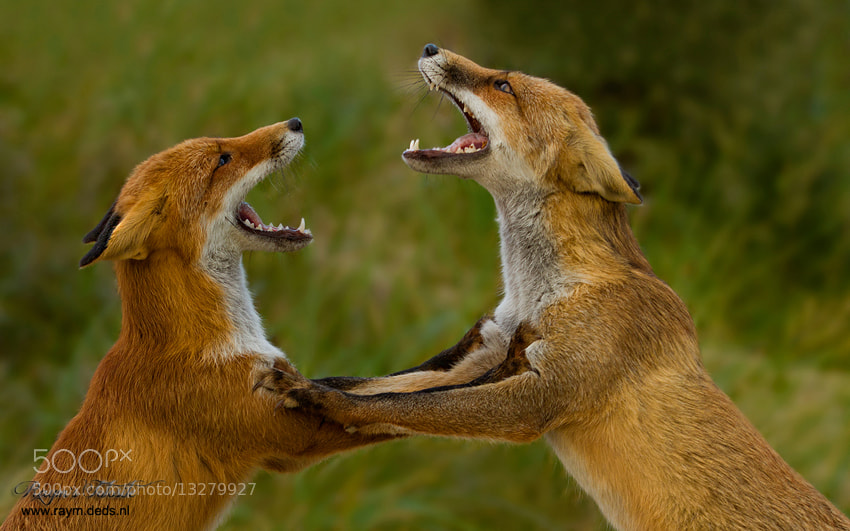 Photograph Having an disagreement by Raymond Friederichs on 500px