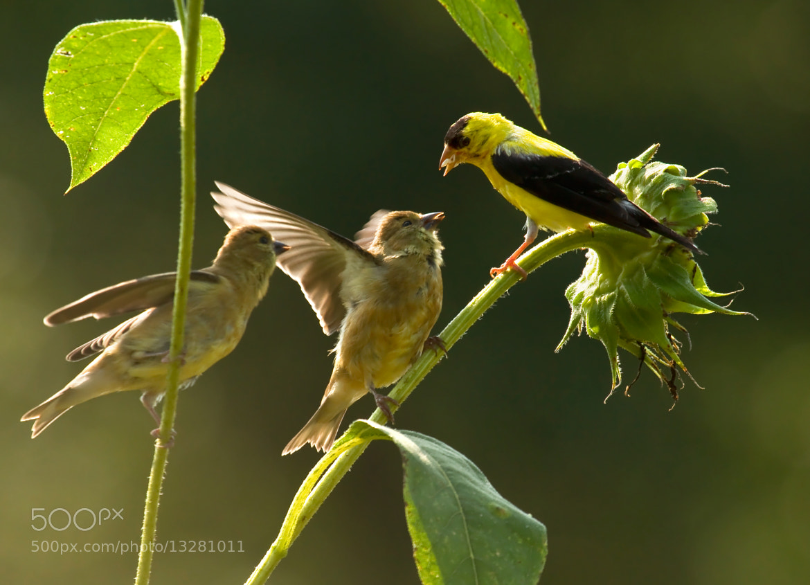 Photograph Breakfast In The Garden by Lorraine Hudgins on 500px