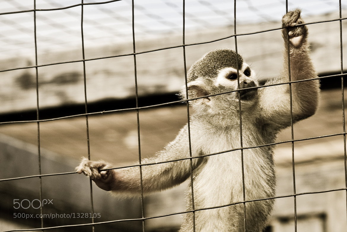Photograph Captivity by Gered Cuerrier on 500px