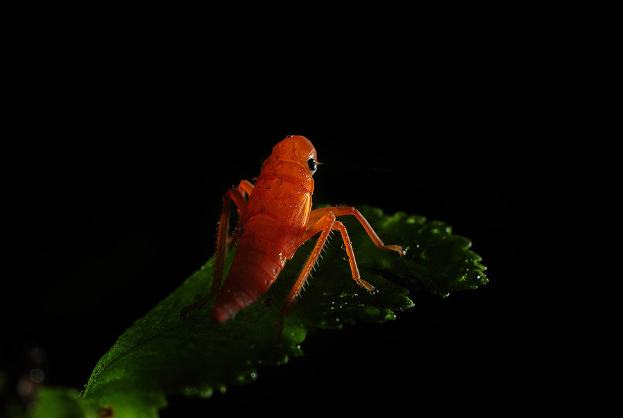 Photograph Little insect. by Pikmy V. on 500px