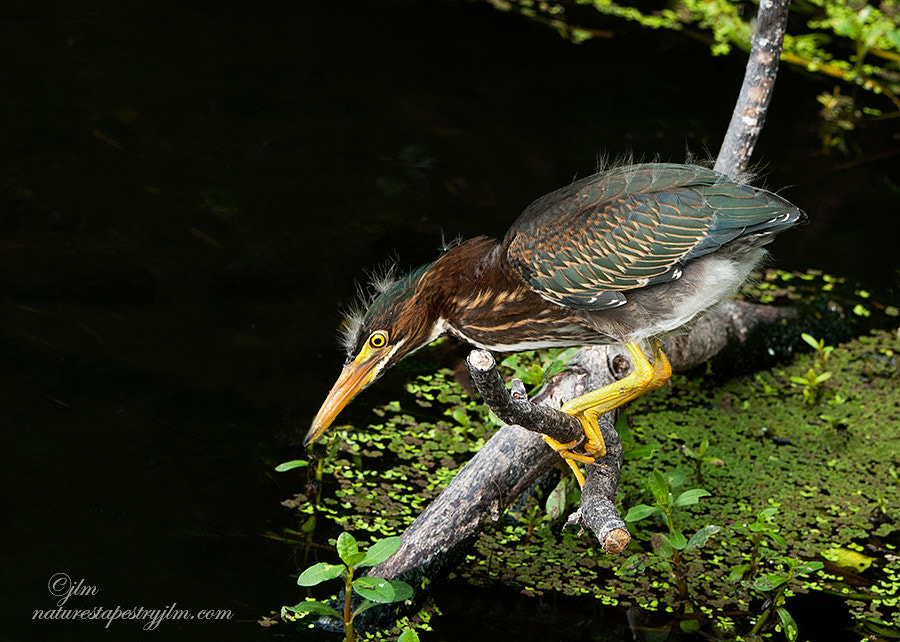 Photograph The Little Fisherman !! by Judylynn Malloch on 500px
