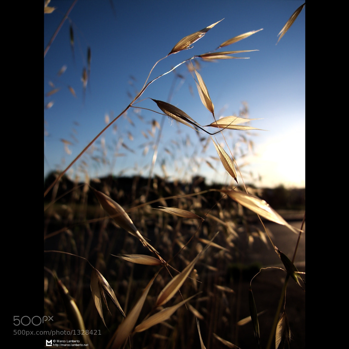 Photograph Avena - IMG_1348 by Marco Lamberto on 500px