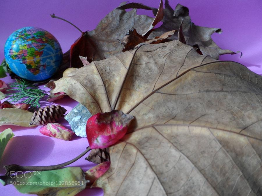 dünya'da sonbahar