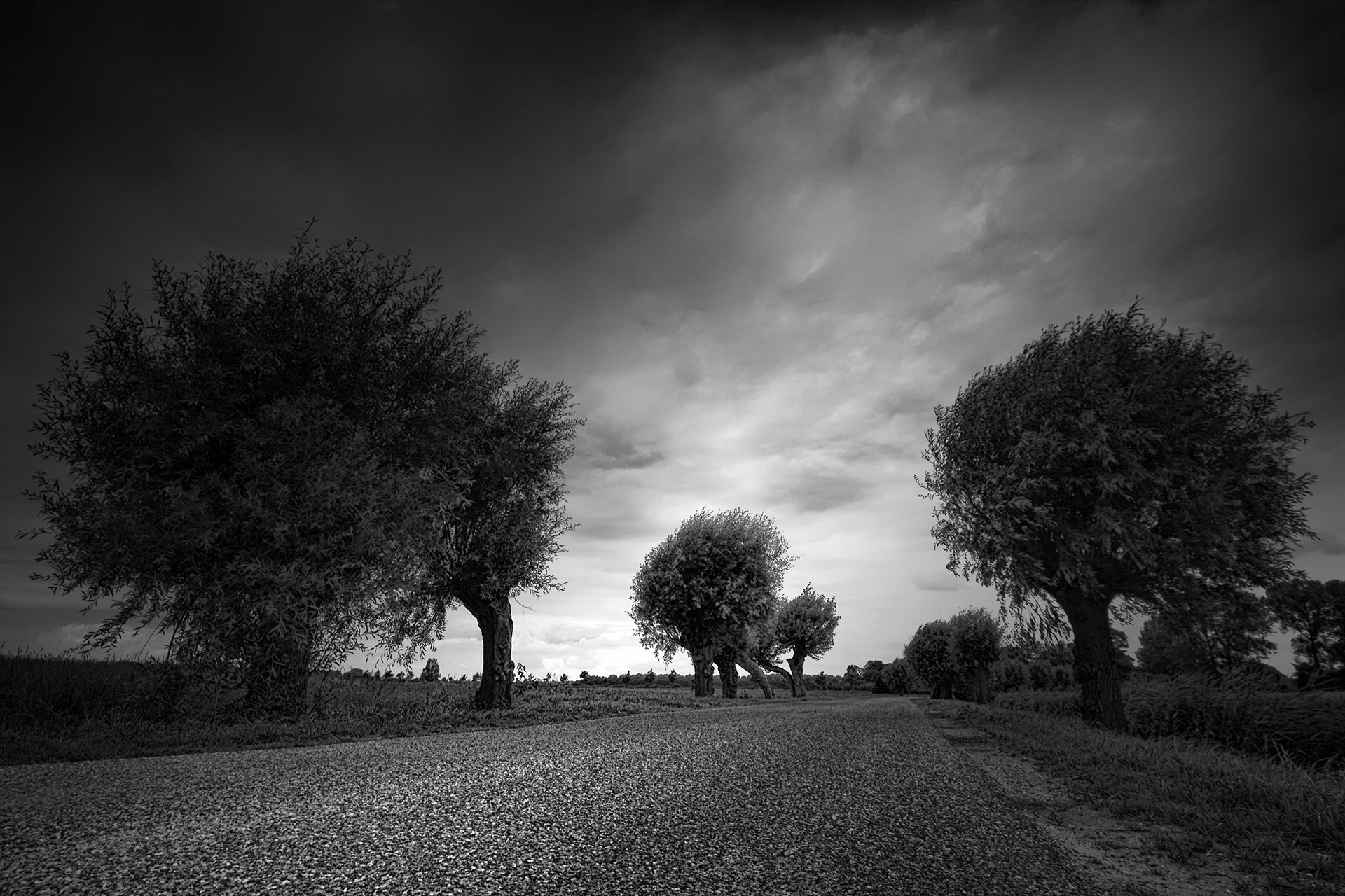 Photograph Willows by Kees Smans on 500px