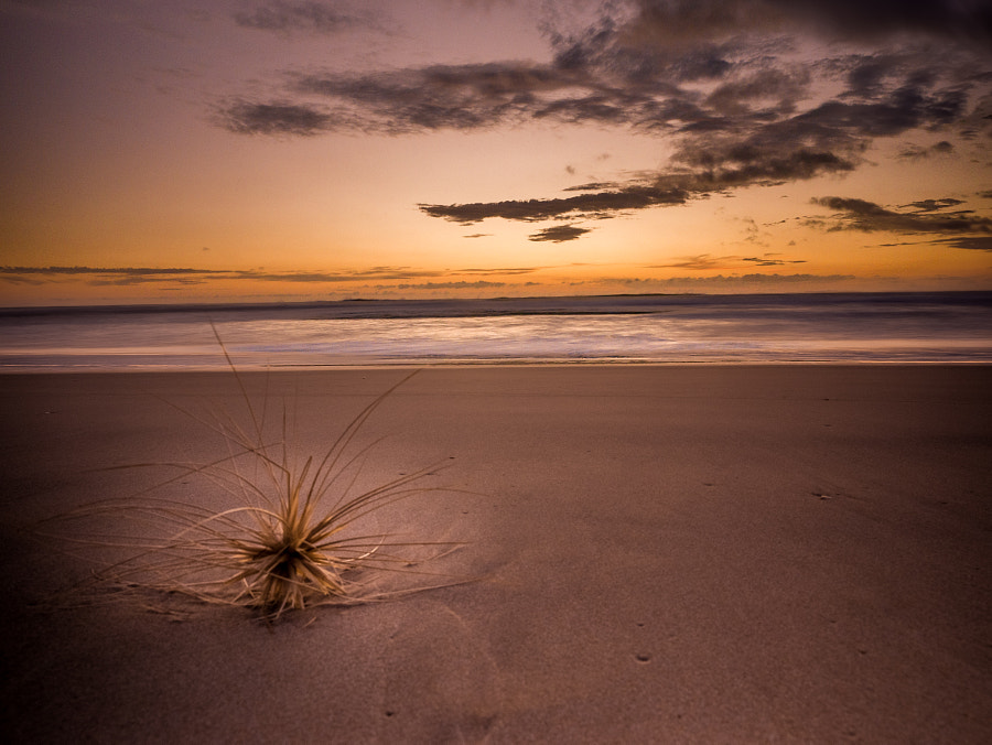 Fraser Island Sunrise by Travis Chau on 500px.com