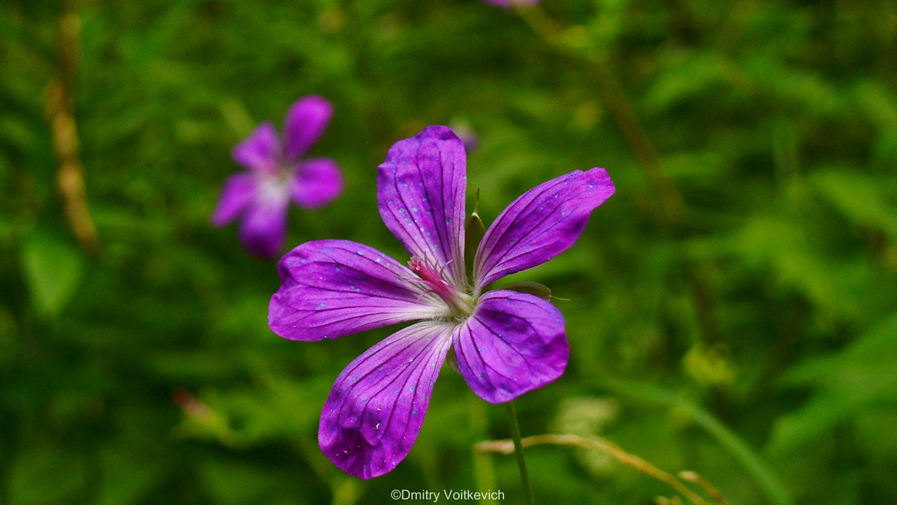 Photograph forest flower by Dmitry Voitkevich on 500px
