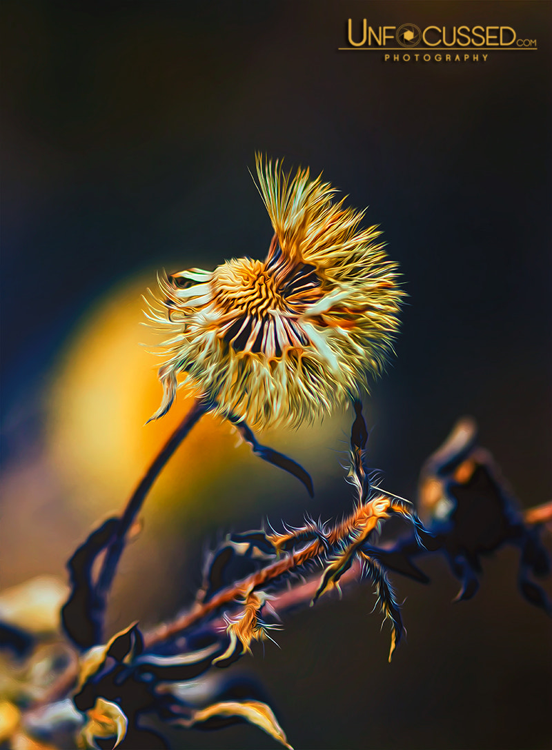 Photograph Dying Nature Glow by Bill Tiepelman on 500px