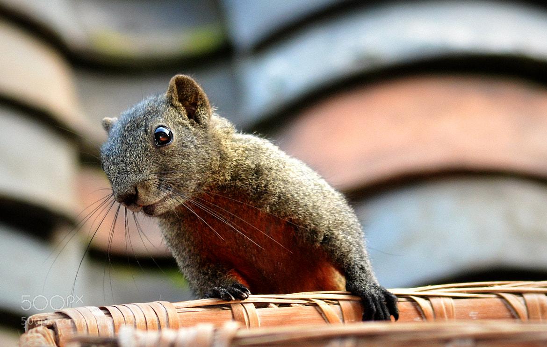 Photograph Squirrel by 五十万加仑 WU on 500px
