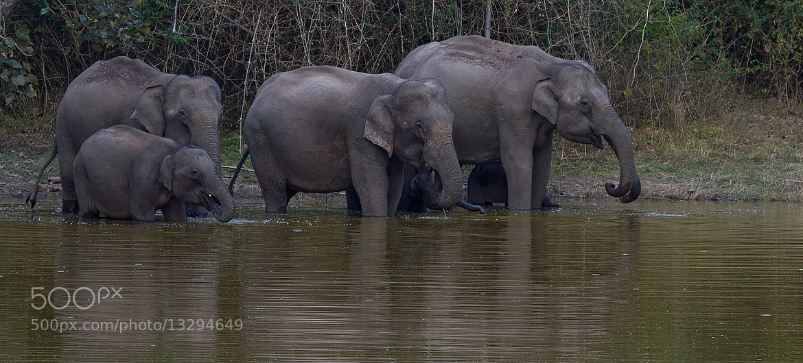Photograph Count the Elephants  by Thejaswi GVN on 500px