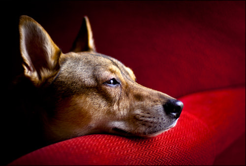 Photograph Lilly in the Red Chair by ericbphotoworks on 500px