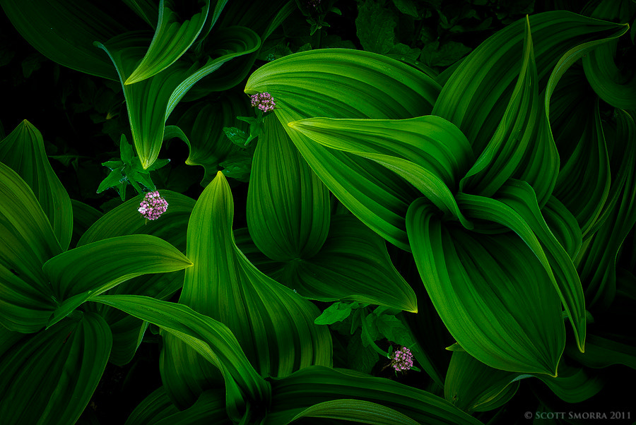 Photograph Veratrum and Wildflowers by Scott  Smorra on 500px
