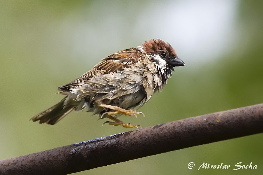 Photograph After the bath by Miroslav Socha on 500px