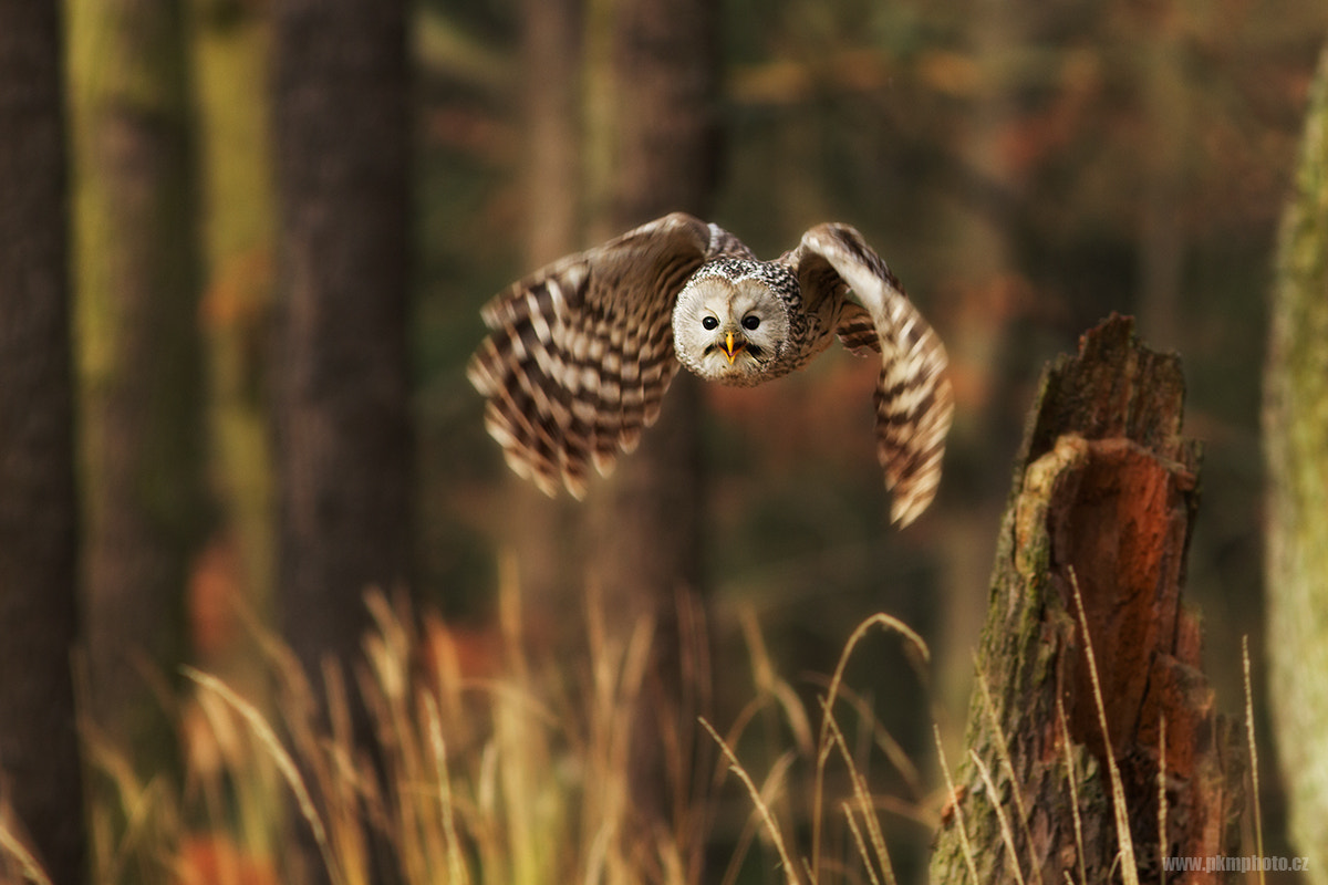 Photograph Get out of here!!! by Peter Krejzl on 500px