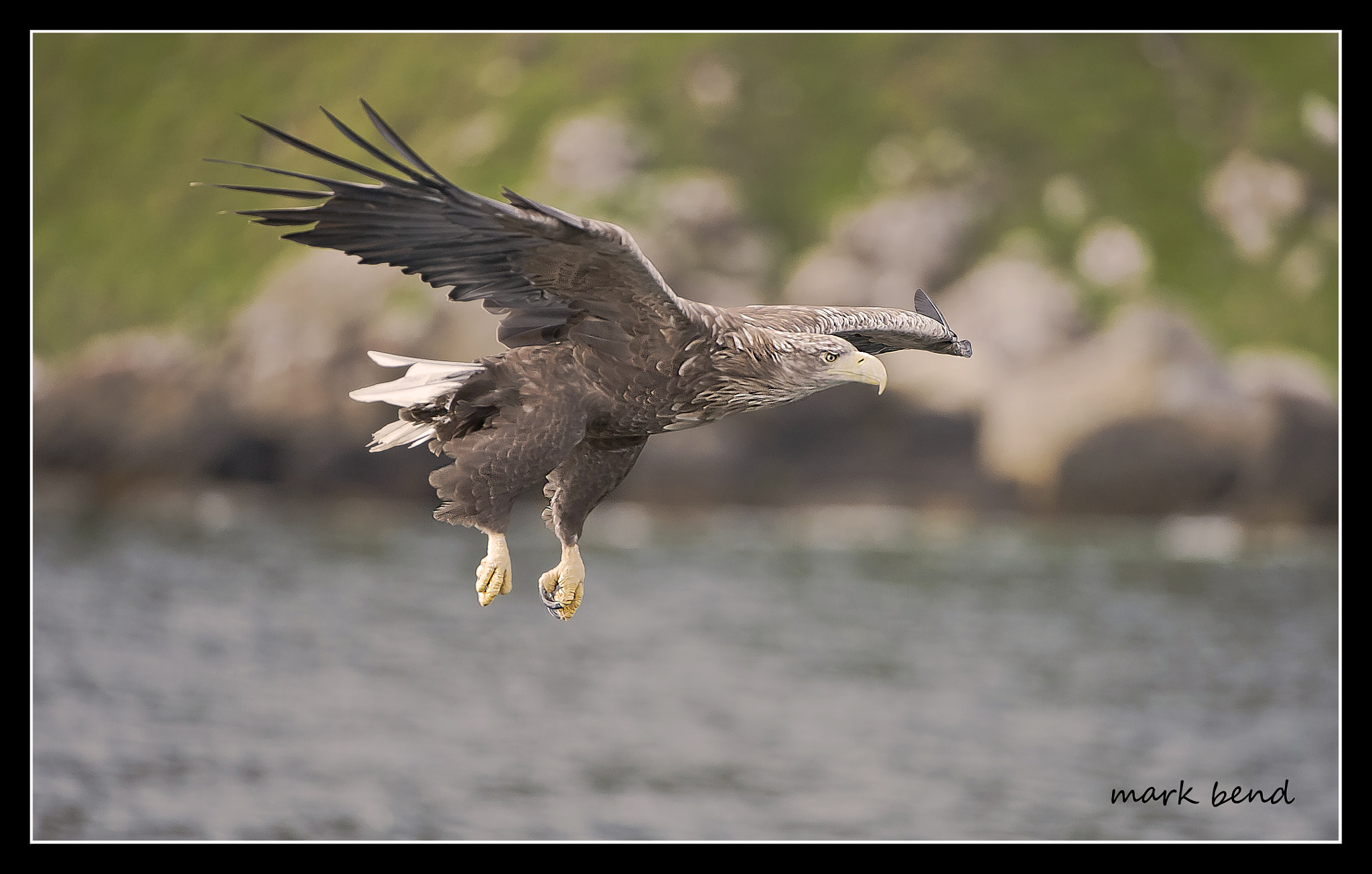 Photograph white tailed sea eagle by Mark Bend on 500px