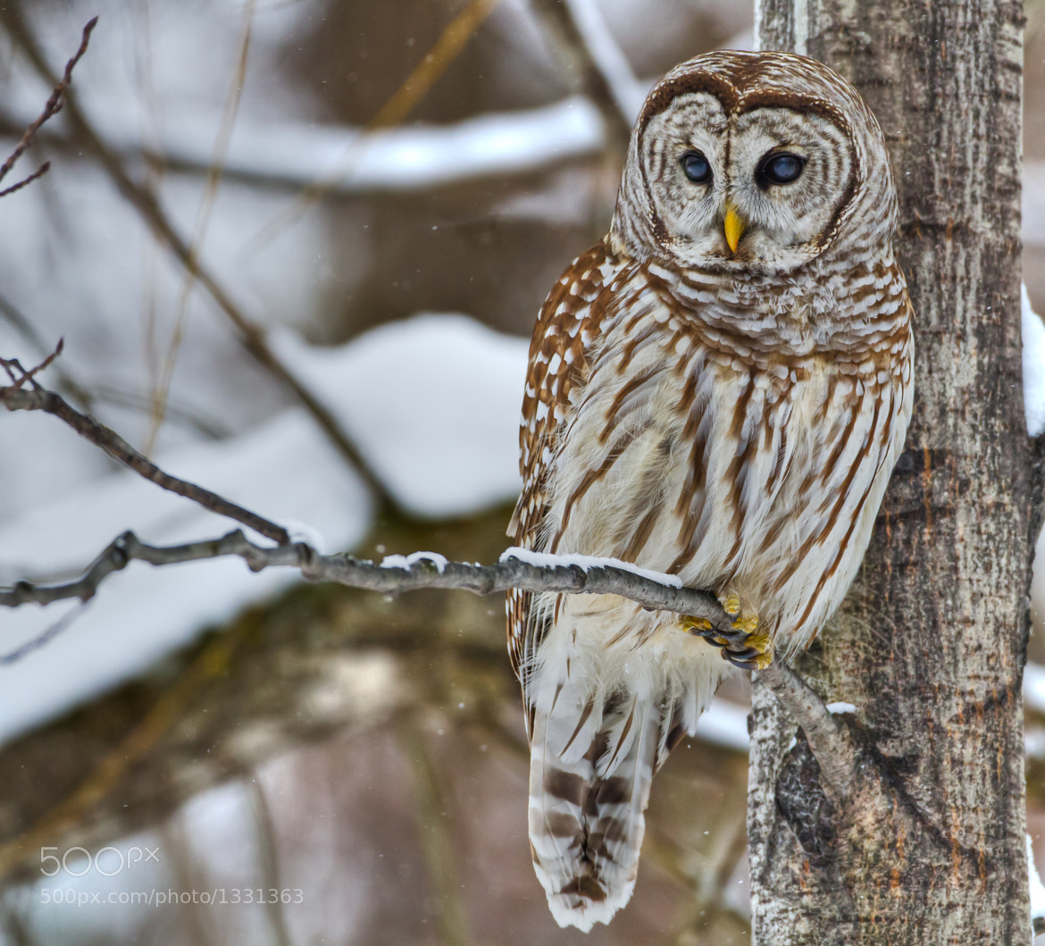 Photograph The eyes by Daniel Gelinas on 500px