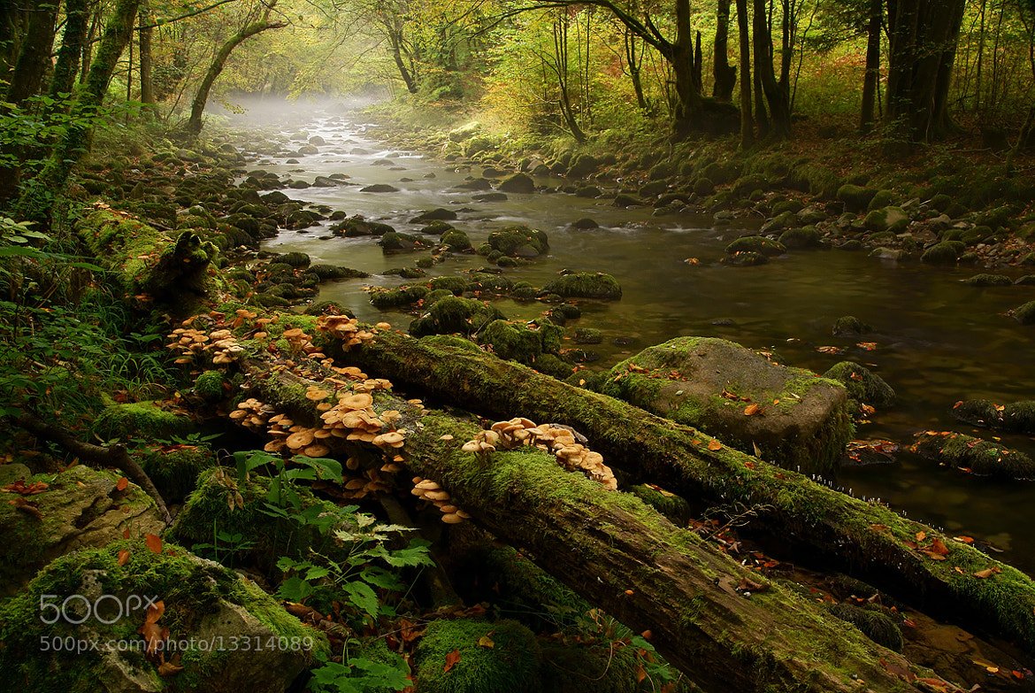 Photograph Where the elfs play by Koraljka S on 500px
