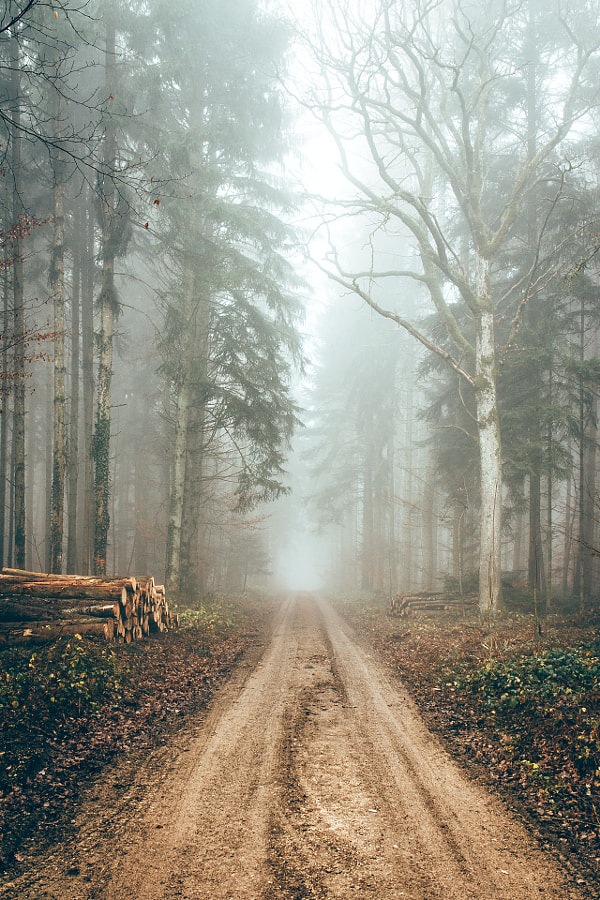 FOG FOREST II
