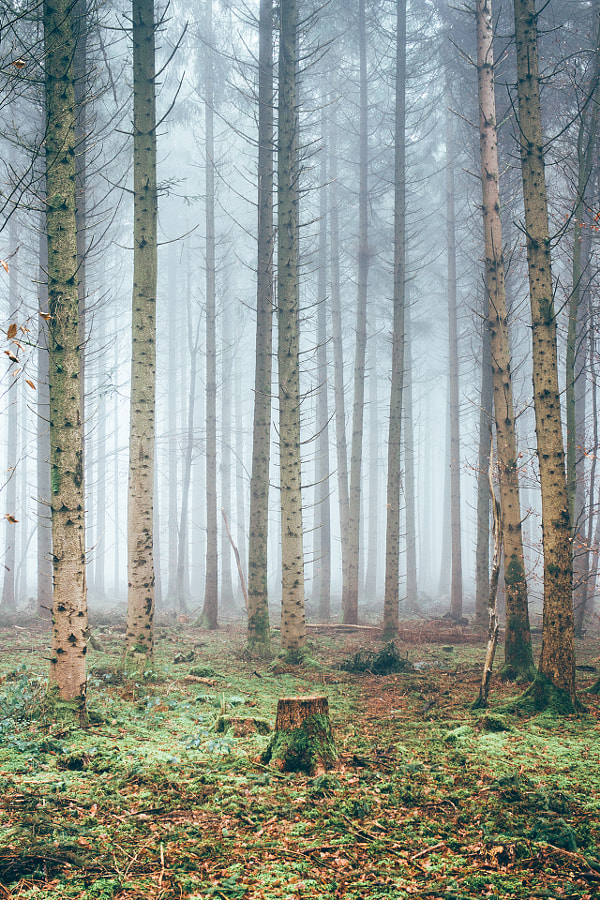 FOG FOREST III