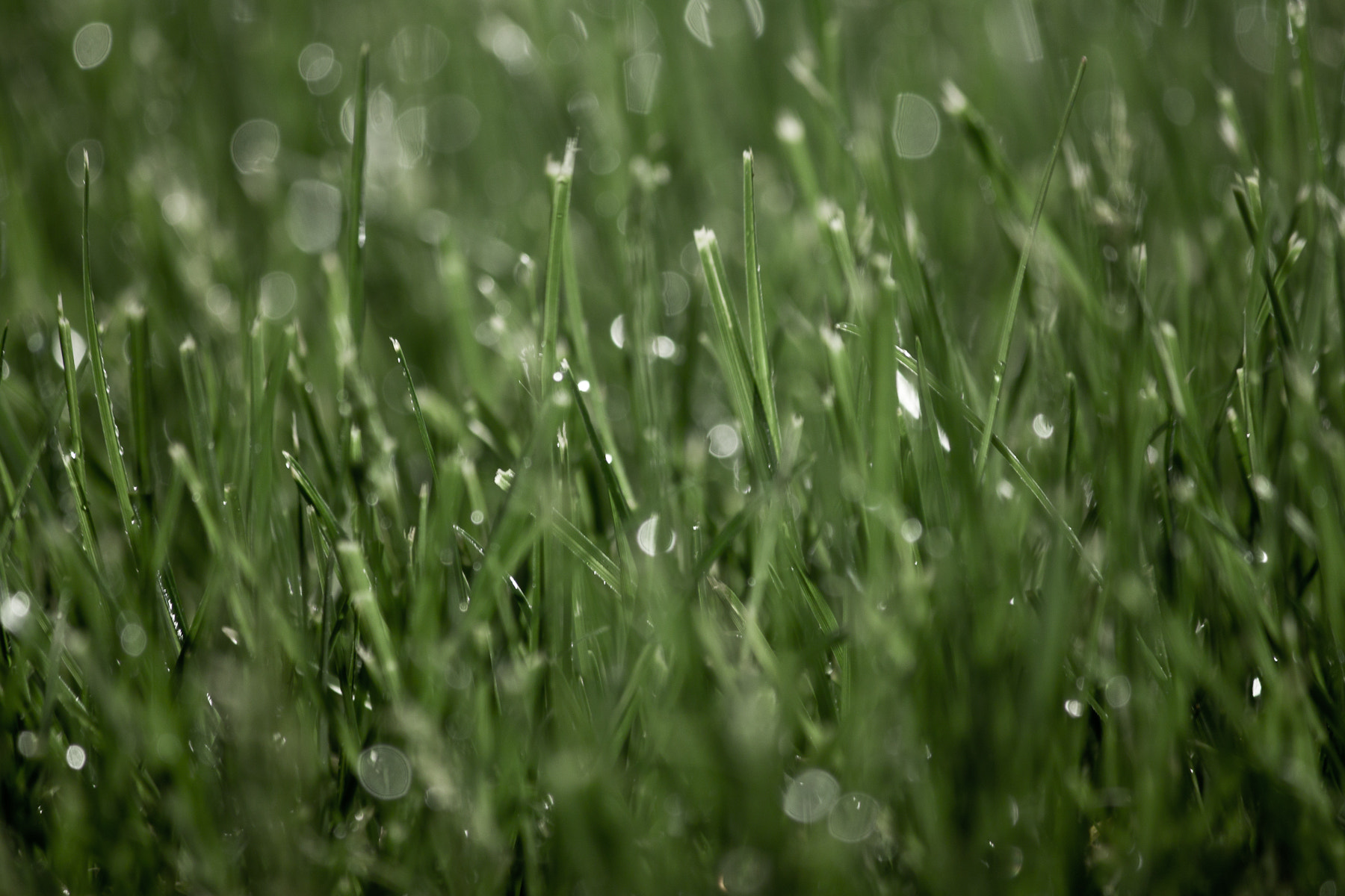 Photograph Dew by Justin Marimon on 500px
